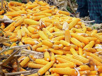 10 % des surfaces cultivées dans le monde sont dédiées aux OGM | Ca m'interpelle... | Scoop.it