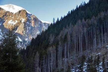 Romanian forests face 'acute' illegal logging problem   GarryRogers Biosphere News   Scoop.it
