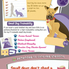Wonder How To Choose A Small Breed Dog