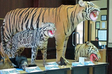 Indonesia police nab illegal wildlife traffickers in sting operation   Wildlife Trafficking: Who Does it? Allows it?   Scoop.it
