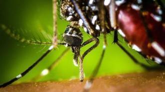 Chikungunya : les autorités sanitaires en alerte sur l'Hexagone | Santé - Recherche | Scoop.it