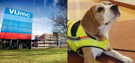 Un perro detecta infecciones hospitalarias por el olfato | COMunicación en Salud | Scoop.it