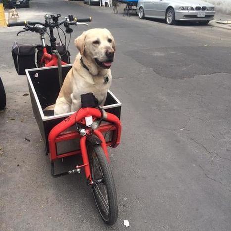 Boris el perro on Twitter   I didn't know it was impossible.. and I did it :-) - No sabia que era imposible.. y lo hice :-)   Scoop.it