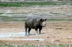 Contre le braconnage, la Namibie joue la carte des communautés rurales | Chuchoteuse d'Alternatives | Scoop.it
