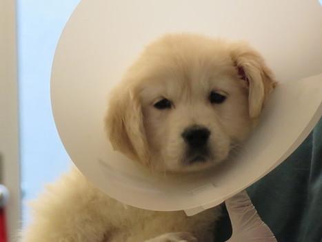 Augen auf beim Hundekauf! | ʕ·͡ᴥ·ʔ Welpenkauf Informationen | Scoop.it