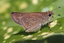 Florida declares two butterfly species extinct as pollinator crisis worsens | Freefire Nature | Scoop.it