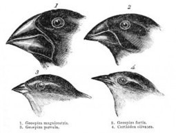 Charles Darwin and The Galapagos: Birthplace of Evolutionary Theory | Biology | Scoop.it