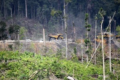 Borneo's rainforest coal: City of London profit. | Envimageine | Scoop.it