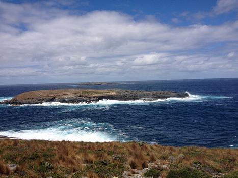 Save Marine Wildlife From Dangerous Survey Technology | GarryRogers NatCon News | Scoop.it