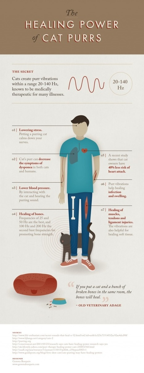 Your Cat's Purr Has Healing Powers - Care2.com | Caring for Cats | Scoop.it