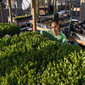 Hydroponic rooftop gardens turn Cairo green - Flying Blue Club Africa | Aquaponics | Scoop.it