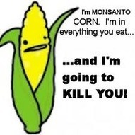 Towards Better Health: Monsanto's Genetically Modified Corn: A ... | GMO Agriculture | Scoop.it