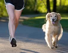 Fitness tracking has gone to the dogs | Pets Market @ a glance | Scoop.it