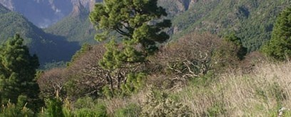 Nature Soundmap | DESARTSONNANTS - CRÉATION SONORE ET ENVIRONNEMENT - ENVIRONMENTAL SOUND ART - PAYSAGES ET ECOLOGIE SONORE | Scoop.it