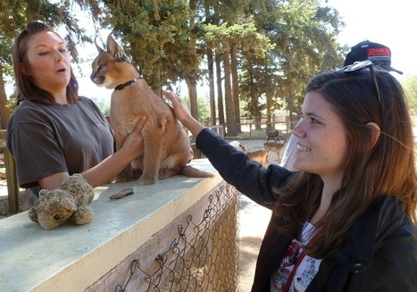 Big Felines as Pets: A Very Bad Idea   OnZineArticles.com   Health   Scoop.it