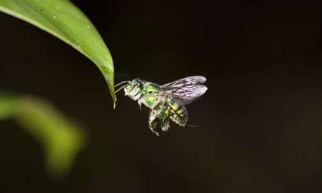 Insect Eyes Enable Drones to Fly Independently | Biomimicry | Scoop.it