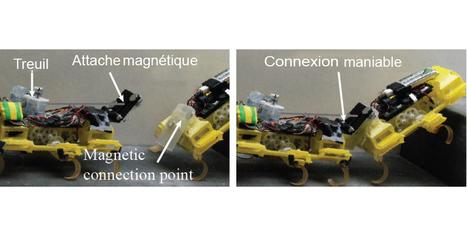 Biomimétisme : le remarquable travail d'équipe des robot-cafards | Post-Sapiens, les êtres technologiques | Scoop.it