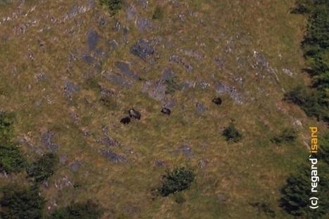 Exceptionnel : les photos de l'ourse accompagnée de trois oursons dans les Pyrénées ! | Pyrénéisme | Scoop.it
