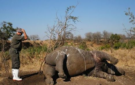 Rifles' silencers and axes - the weapons of a rhino poacher | What's Happening to Africa's Rhino? | Scoop.it
