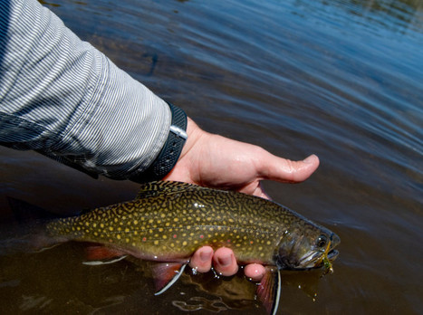 DNR could change trout/bass fishing restrictions - Ogemaw County Herald | Fish Habitat | Scoop.it