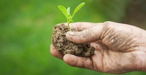 Agricoltura intensiva VS Agricoltura sostenibile: il Video di Food We Want | Agricoltura sostenibile | Scoop.it