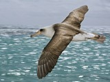 Albatross's Effortless Flight Decoded—May Influence Future Planes | Biomimicry | Scoop.it