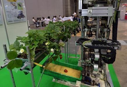 Japon: un robot qui passe ses nuits à récolter seul les fraises bien mûres | Des 4 coins du monde | Scoop.it