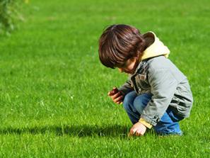 Best Lawn Care Service in Utah- Turfplusutah.com | Lawn Care Services | Scoop.it