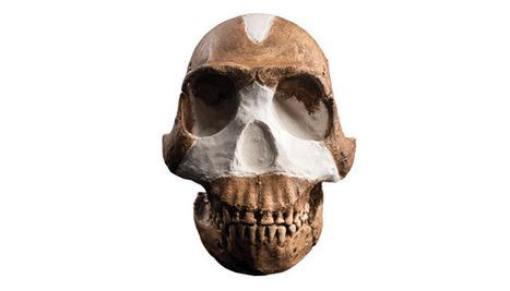 L'incroyable Homo naledi | Aux origines | Scoop.it
