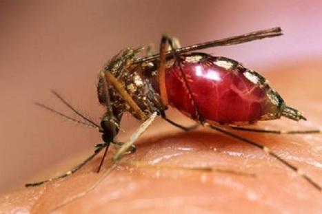 Dengue : 826 cas confirmés dont 300 pour le seul mois d'octobre - TAHITI INFOS   cellule de crise   Scoop.it