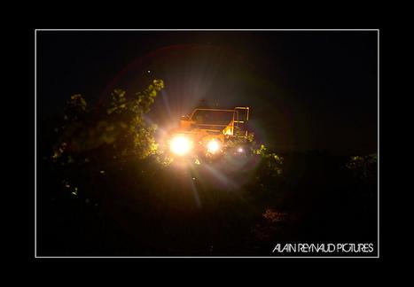 Vendanges nocturne à Alignan du vent | Flickr: partage de photos! | Images et infos du monde viticole | Scoop.it