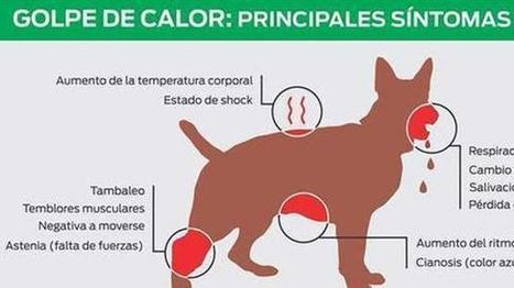 Estos son los síntomas de un golpe de calor en mascotas | AVATCOR | Scoop.it