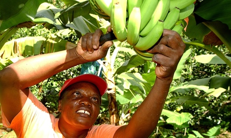 Fairtrade really does make a difference to people's lives - The Guardian | Life on the margins | Scoop.it