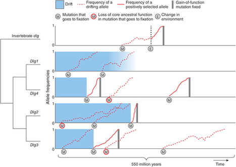 Retooling spare parts: gene duplication and cognition : Nature Neuroscience : Nature Publishing Group   Darwinian Ascension   Scoop.it