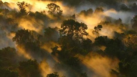 Carbon-storing Amazon forest is losing its touch | Timberland Investment | Scoop.it