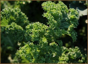 If You're Not Eating Kale Regularly, This Might Change Your Mind   Healthy Whole Foods   Scoop.it