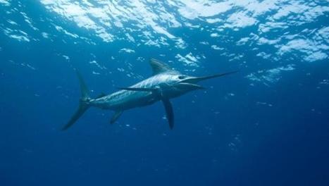 Nos océans sont malades de nos activités | Zones humides - Ramsar - Océans | Scoop.it