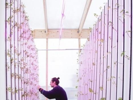 Arriva l'Ikea della serra, il kit fai-da-te per coltivare frutta e verdura in città - Food24   Conetica   Scoop.it