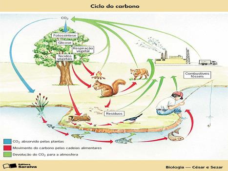 Ciclos Biogeoquímicos | Aulas de Biologia-1emC | Scoop.it