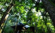 Google Technology to Help Prevent Deforestation - Environmental Leader | Monitoreo y seguimiento  ambiental  mediante imagenes de satelite | Scoop.it