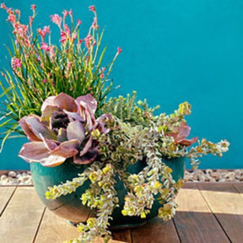 53 cool container gardens | Container Gardening | Scoop.it