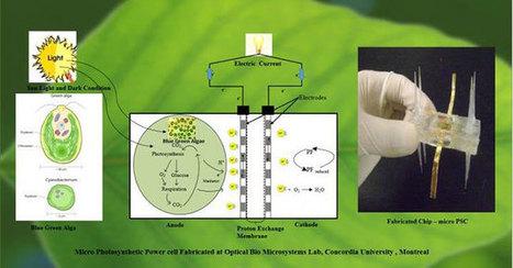 Energia solare dalle alghe grazie a microcelle fotosintetiche - GreenStyle | scatol8® | Scoop.it