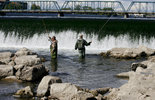 Dramatic video captures spawning coho salmon (and one brown trout) at Grand ... - The Ann Arbor News - MLive.com | Fish Habitat | Scoop.it