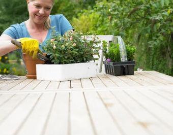Cultivo de flores desde semilla | Jardineria | El cultivo de gladiolos | Scoop.it