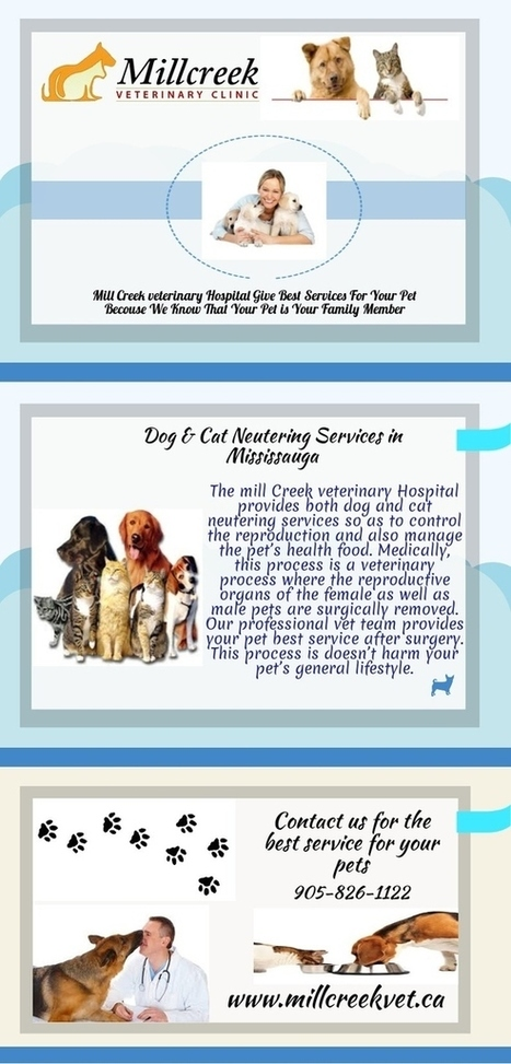 Dog & Cat Neuter Services in Mississauga | Animal Hospital Mississauga - Affordable Pet Vet Services | Scoop.it