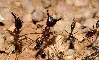 The Remarkable Self-organization of Ants | Biomimicry | Scoop.it