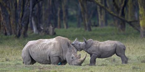 La sixième extinction massive des espèces aurait commencé   ENERGIES NOUVELLES   Scoop.it