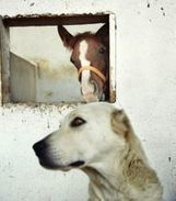 » Horses, Not Dogs, Reduce Aggression in Violent Offenders - Equine Therapy | Animals R Us | Scoop.it
