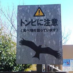 Urbanisation et agressivité des oiseaux   Picto...   BTS-M22-ville-en-mutation   Scoop.it