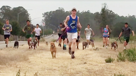 High school cross country team takes a joyous run with local shelter dogs | Kickin' Kickers | Scoop.it